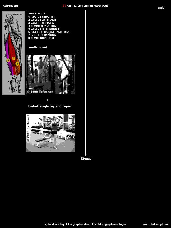 ant. hakan yılmaz quadriceps SMITH SQUAT 1 RECTUS FEMORIS 2 VASTUS LATERALIS 3 VASTUS MEDIALIS 4 SEMIMEMRANOSUS 5 VASTUS INTERMEDIUS 6 BİCEPS FEMORIS+