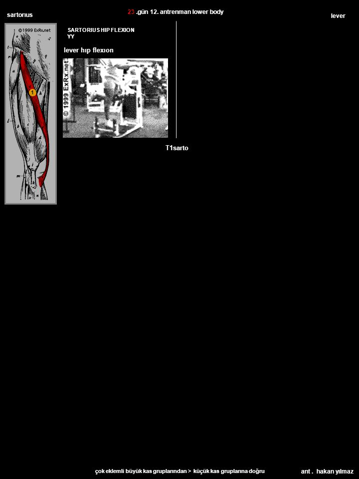 ant. hakan yılmaz sartorıus SARTORIUS HIP FLEXION YY lever T1sarto 23.gün 12.
