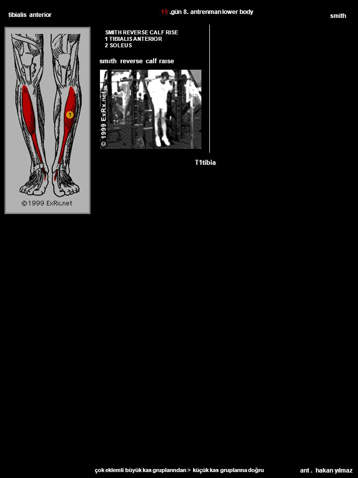 ant. hakan yılmaz tibialis anterior SMITH REVERSE CALF RISE 1 TIBIALIS ANTERIOR 2 SOLEUS smith T1tibia 15.gün 8. antrenman lower body çok eklemli büyü