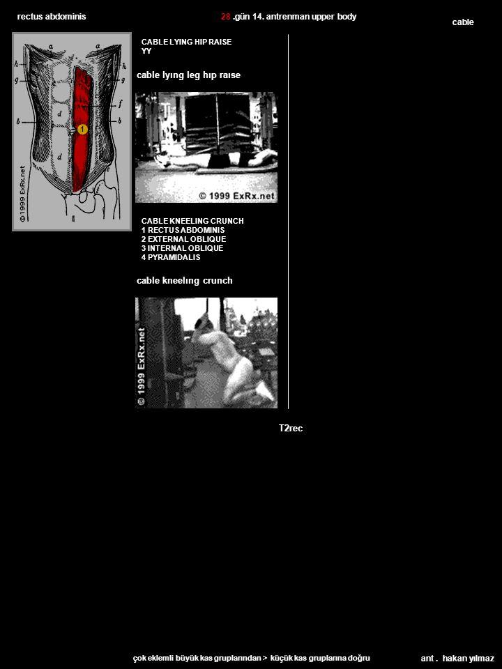 ant. hakan yılmaz rectus abdominis CABLE KNEELING CRUNCH 1 RECTUS ABDOMINIS 2 EXTERNAL OBLIQUE 3 INTERNAL OBLIQUE 4 PYRAMIDALIS cable CABLE LYING HIP