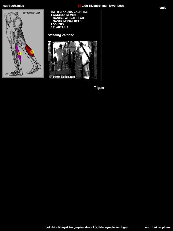 ant. hakan yılmaz gastrecnemius SMITH STANDING CALF RISE 1 GASTROCNEMIUS GASTR.