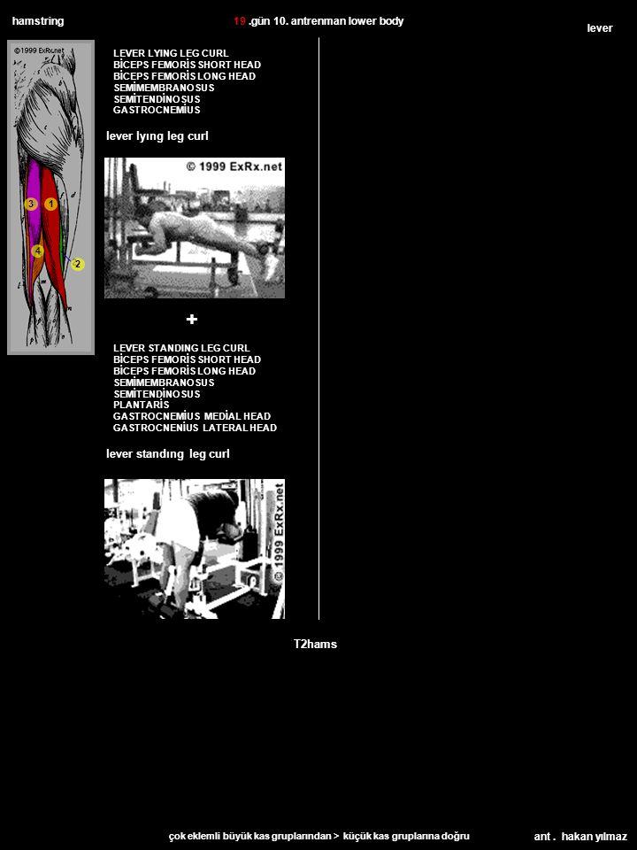 ant. hakan yılmaz hamstring T2hams LEVER LYING LEG CURL BİCEPS FEMORİS SHORT HEAD BİCEPS FEMORİS LONG HEAD SEMİMEMBRANOSUS SEMİTENDİNOSUS GASTROCNEMİU