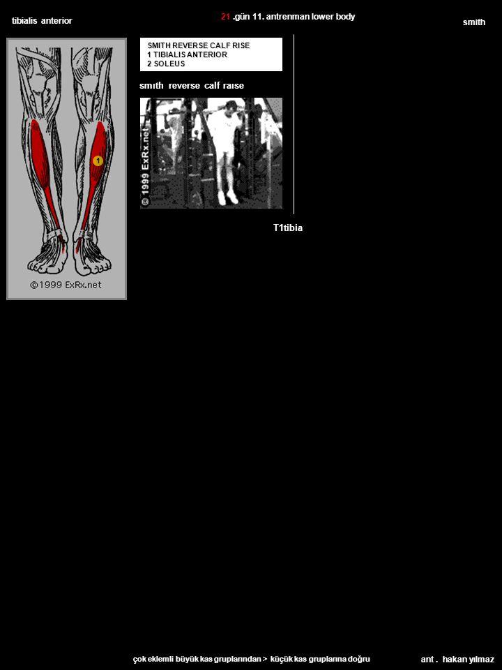 ant. hakan yılmaz tibialis anterior SMITH REVERSE CALF RISE 1 TIBIALIS ANTERIOR 2 SOLEUS smith T1tibia 21.gün 11. antrenman lower body çok eklemli büy