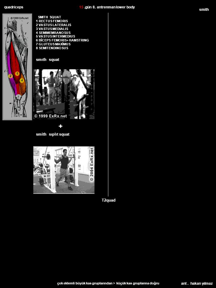 ant.hakan yılmaz biceps brachii barbell T1bicep BICEPS BAEBELL CURL YY 22.gün 11.
