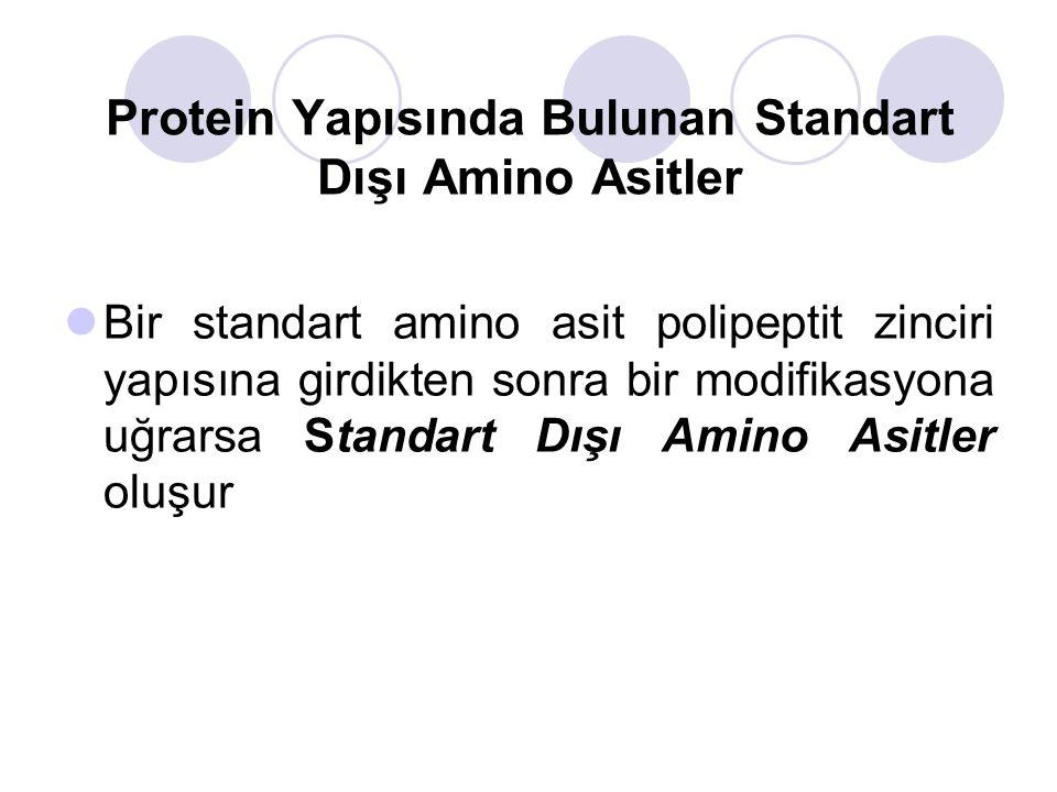 Bir standart amino asit polipeptit zinciri yapısına girdikten sonra bir modifikasyona uğrarsa Standart Dışı Amino Asitler oluşur Protein Yapısında Bulunan Standart Dışı Amino Asitler