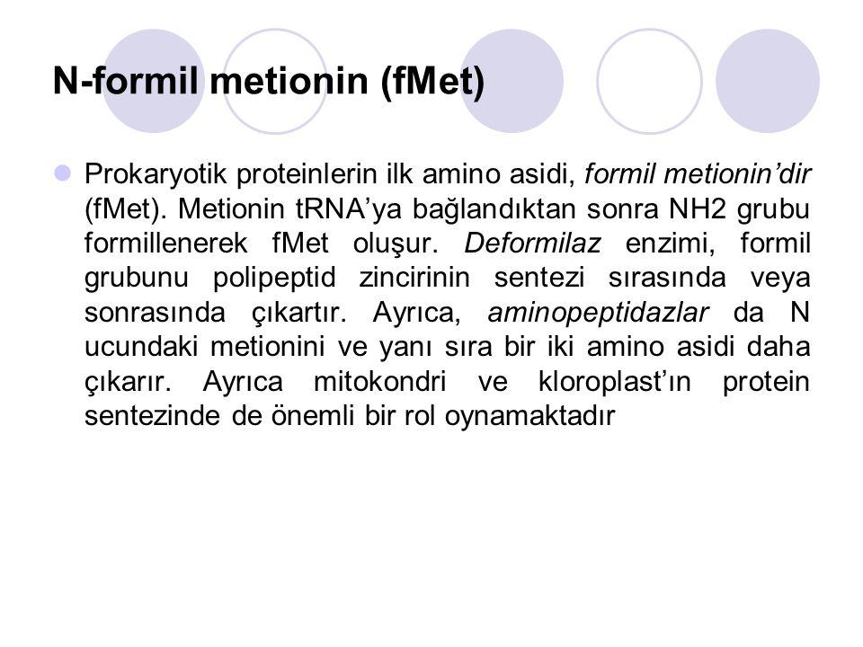 N-formil metionin (fMet) Prokaryotik proteinlerin ilk amino asidi, formil metionin'dir (fMet).