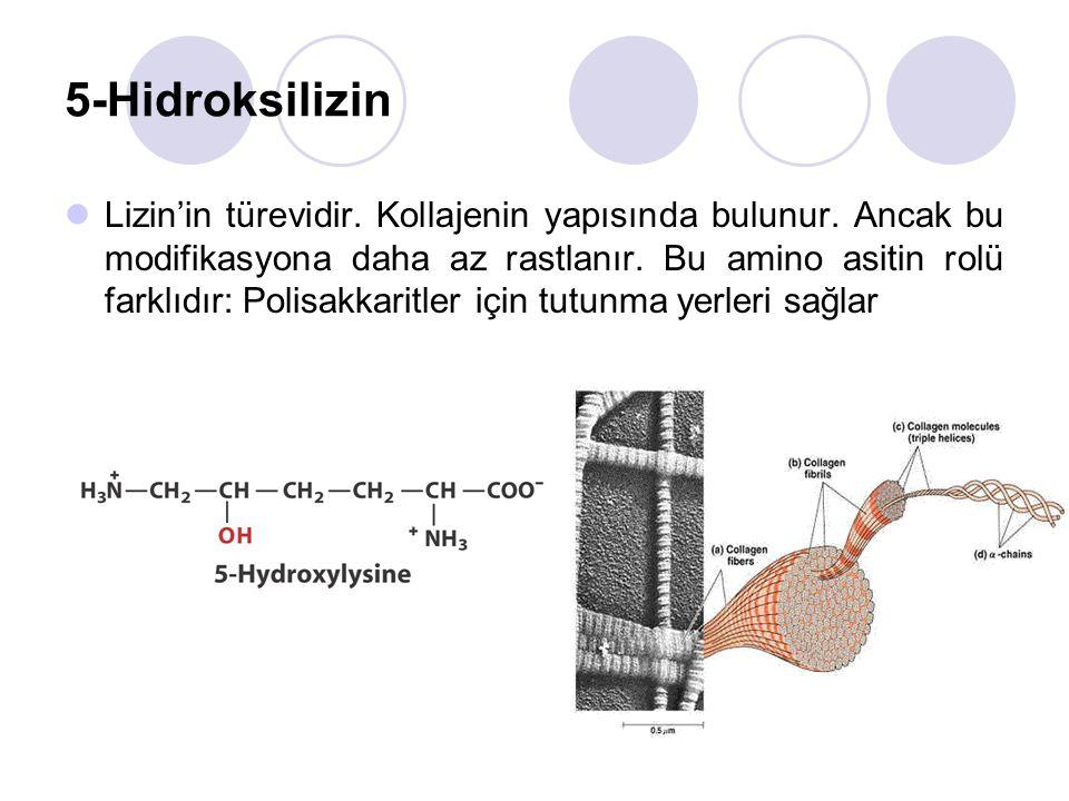 5-Hidroksilizin Lizin'in türevidir.Kollajenin yapısında bulunur.