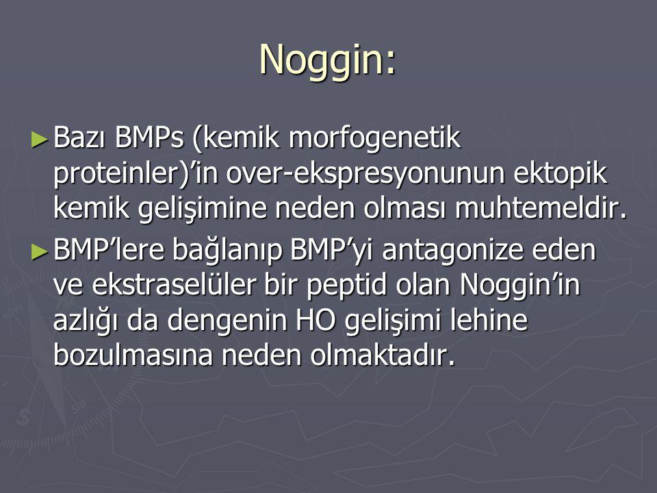 Noggin: ► Bazı BMPs (kemik morfogenetik proteinler)'in over-ekspresyonunun ektopik kemik gelişimine neden olması muhtemeldir. ► BMP'lere bağlanıp BMP'