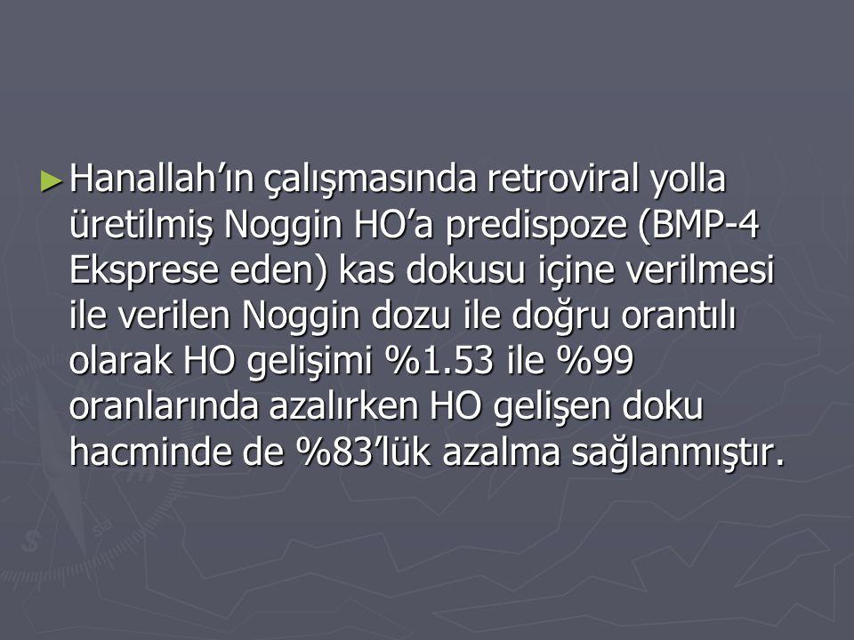 ► Hanallah'ın çalışmasında retroviral yolla üretilmiş Noggin HO'a predispoze (BMP-4 Eksprese eden) kas dokusu içine verilmesi ile verilen Noggin dozu