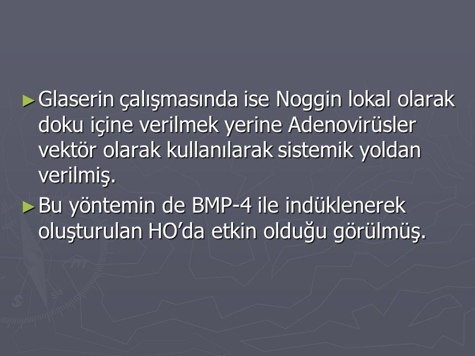 ► Glaserin çalışmasında ise Noggin lokal olarak doku içine verilmek yerine Adenovirüsler vektör olarak kullanılarak sistemik yoldan verilmiş. ► Bu yön