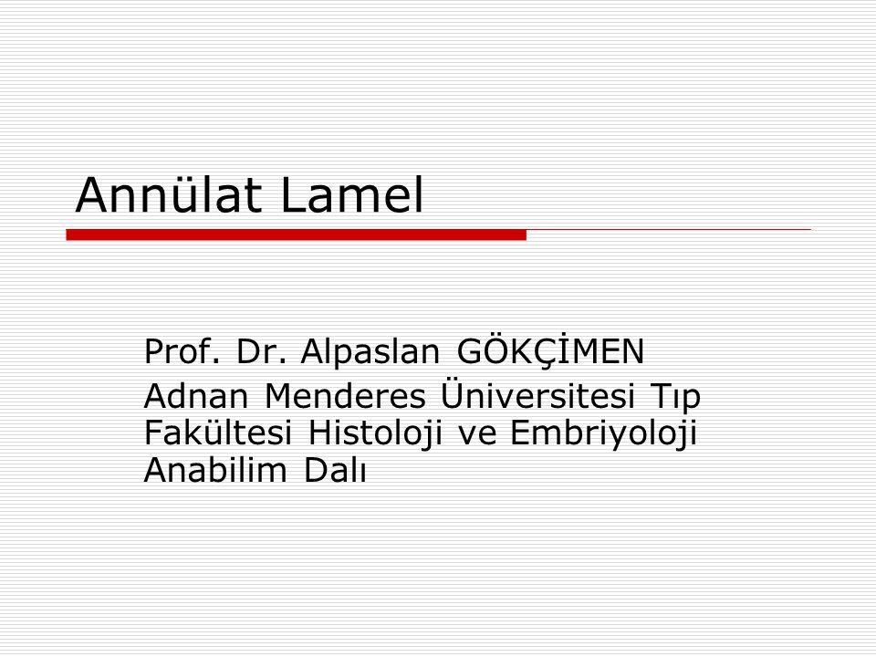 Annülat Lamel Prof.Dr.