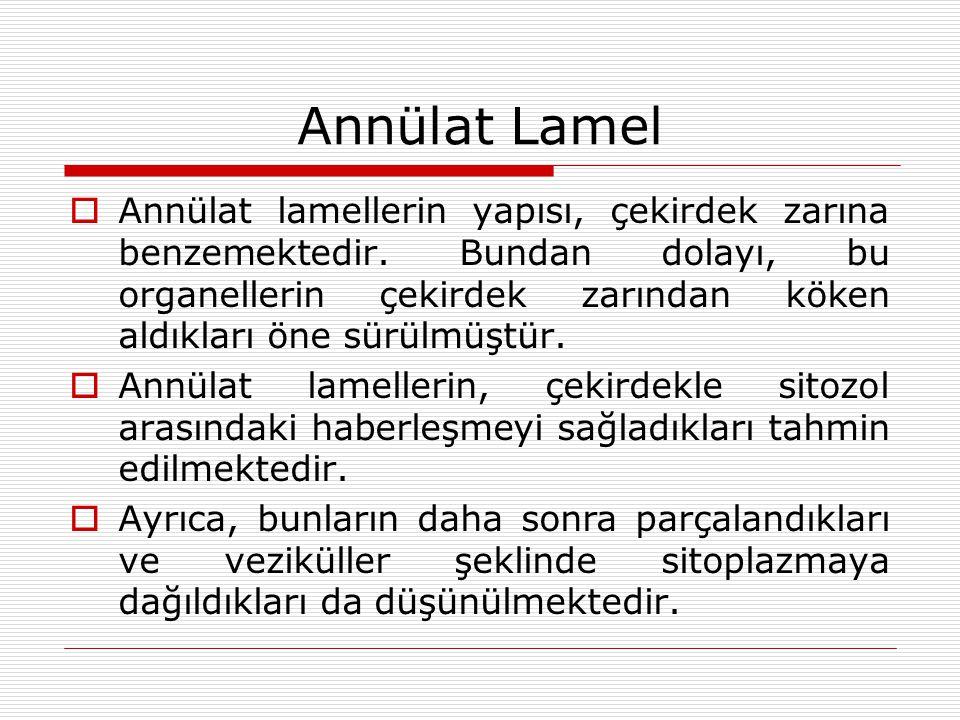 Annülat Lamel  Annülat lamellerin yapısı, çekirdek zarına benzemektedir.