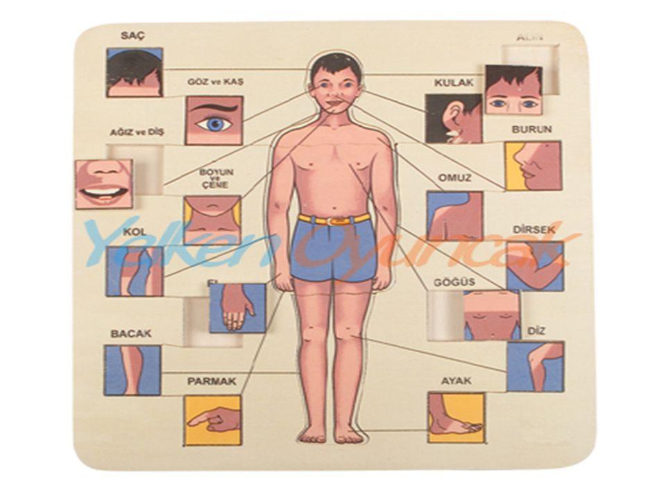  Kanımızı pompalayarak kanımızın damarlarda dolaşmasını sağlar. GÖREVİ