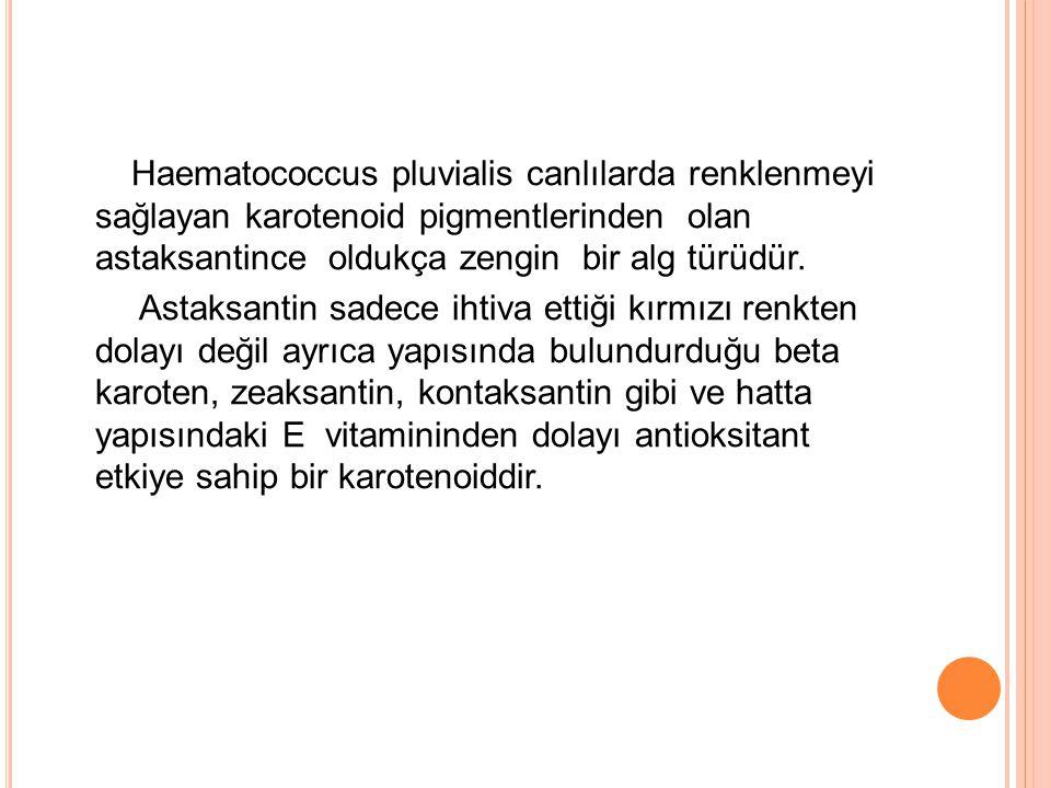 Haematococcus pluvialis canlılarda renklenmeyi sağlayan karotenoid pigmentlerinden olan astaksantince oldukça zengin bir alg türüdür. Astaksantin sade