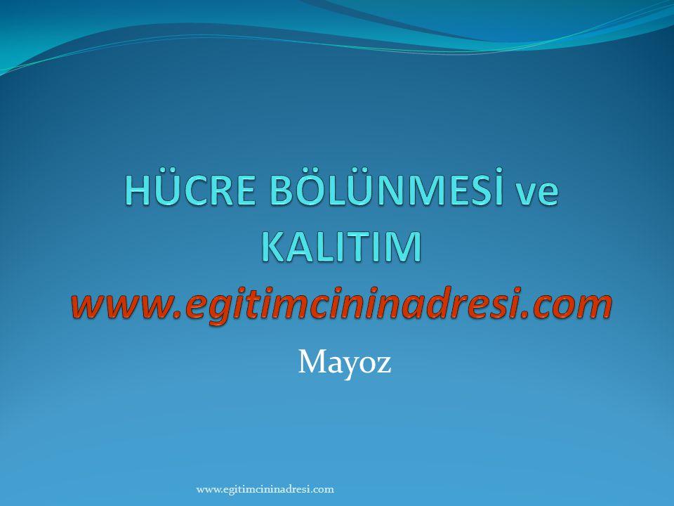 Mayoz www.egitimcininadresi.com