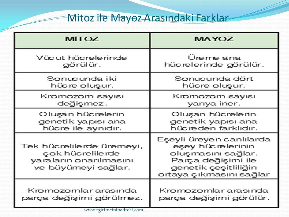 Mitoz ile Mayoz Arasındaki Farklar www.egitimcininadresi.com