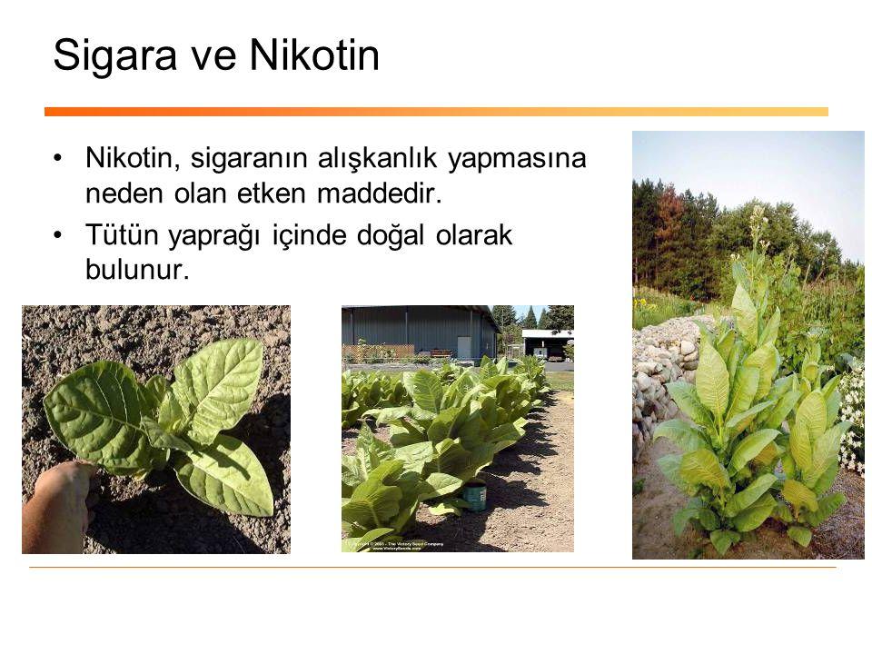 Türk Kalp Vakfı IQS ile Sigara Bırakmayı destekliyor.