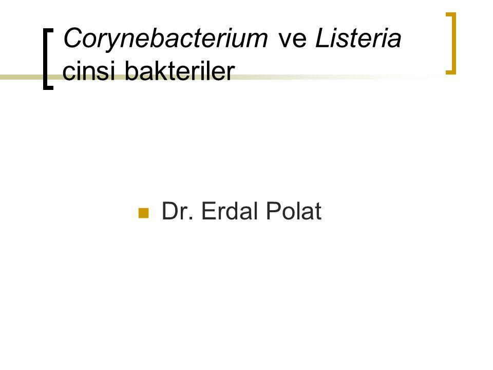 Corynebacterium ve Listeria cinsi bakteriler Dr. Erdal Polat