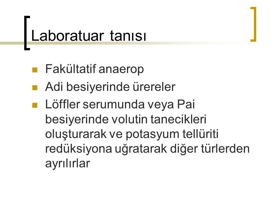 Laboratuar tanısı Fakültatif anaerop Adi besiyerinde ürereler Löffler serumunda veya Pai besiyerinde volutin tanecikleri oluşturarak ve potasyum tellü