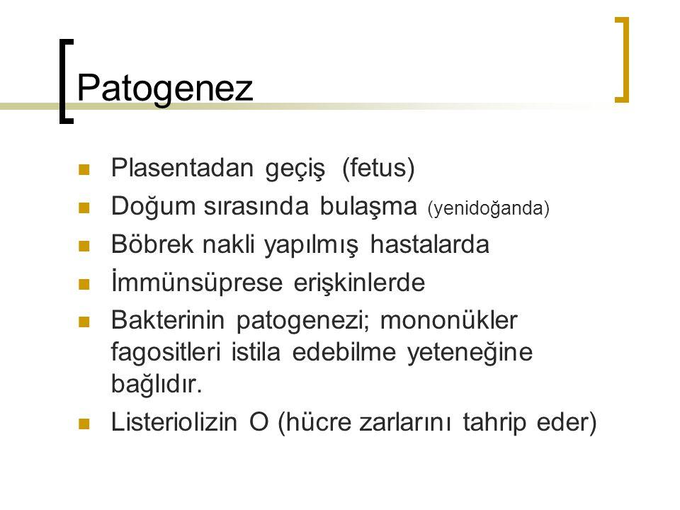 Patogenez Plasentadan geçiş (fetus) Doğum sırasında bulaşma (yenidoğanda) Böbrek nakli yapılmış hastalarda İmmünsüprese erişkinlerde Bakterinin patoge