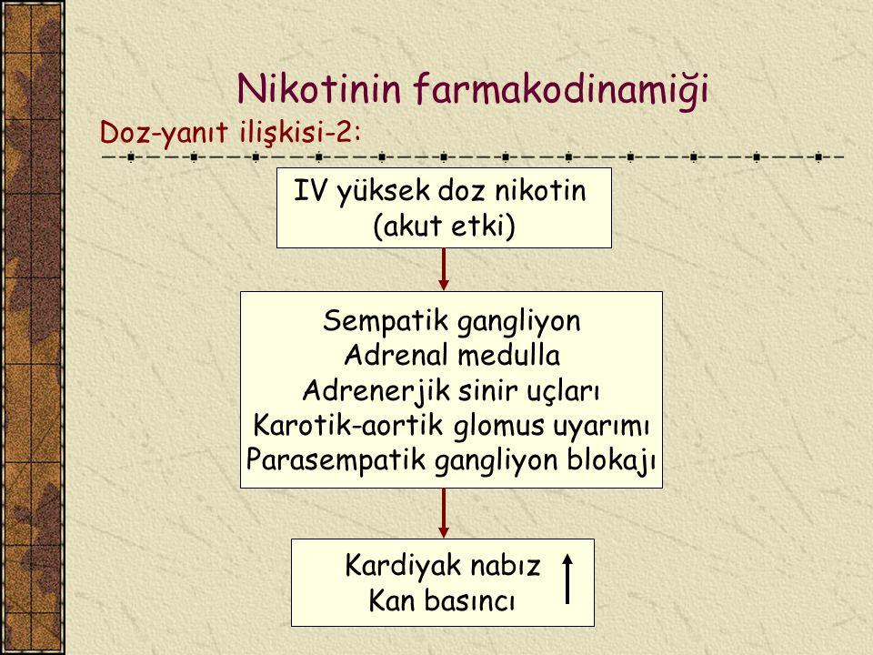Nikotinin farmakodinamiği Doz-yanıt ilişkisi-2: IV yüksek doz nikotin (akut etki) Sempatik gangliyon Adrenal medulla Adrenerjik sinir uçları Karotik-a