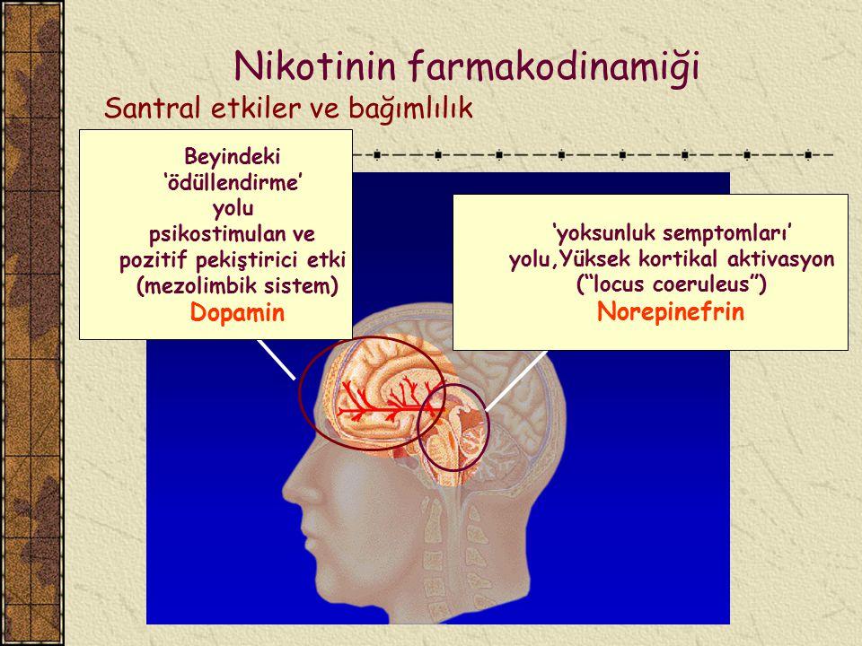 """. 'yoksunluk semptomları' yolu,Yüksek kortikal aktivasyon (""""locus coeruleus"""") Norepinefrin Beyindeki 'ödüllendirme' yolu psikostimulan ve pozitif peki"""