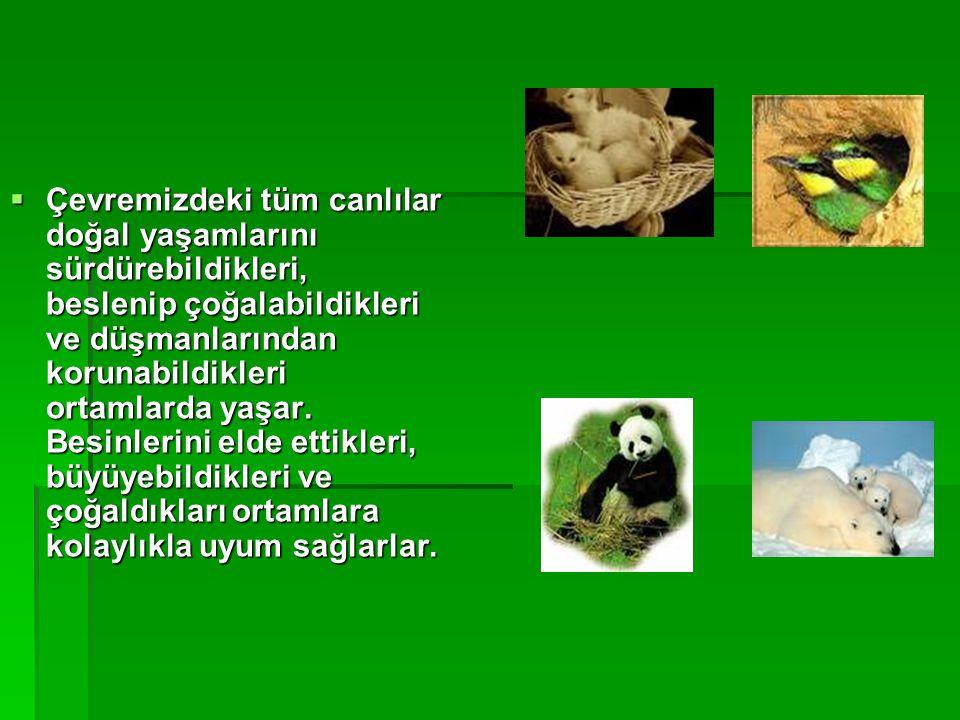  Çevremizdeki tüm canlılar doğal yaşamlarını sürdürebildikleri, beslenip çoğalabildikleri ve düşmanlarından korunabildikleri ortamlarda yaşar. Besinl