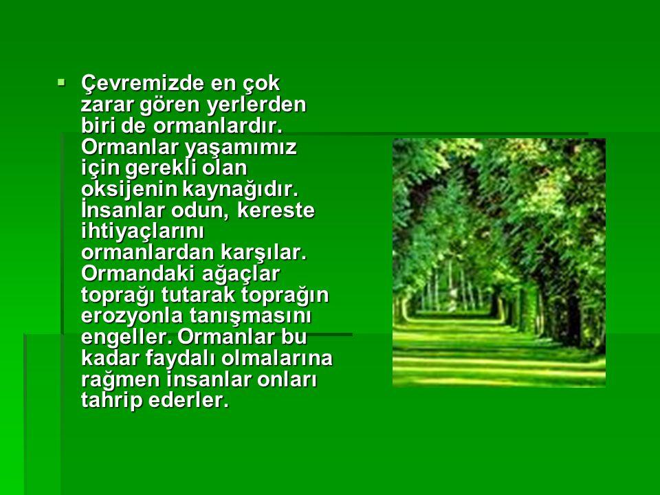  Çevremizde en çok zarar gören yerlerden biri de ormanlardır. Ormanlar yaşamımız için gerekli olan oksijenin kaynağıdır. İnsanlar odun, kereste ihtiy
