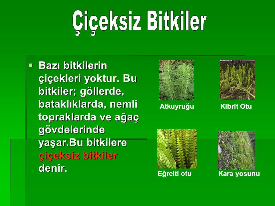 BBBBazı bitkilerin çiçekleri yoktur. Bu bitkiler; göllerde, bataklıklarda, nemli topraklarda ve ağaç gövdelerinde yaşar.Bu bitkilere çiçeksiz bitk