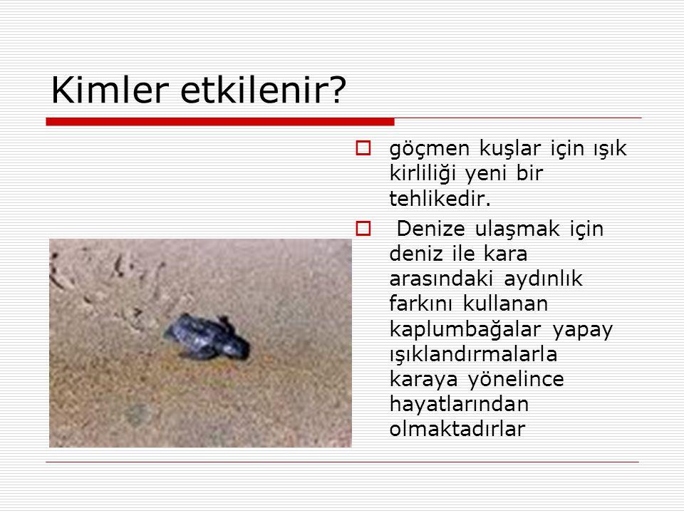 Kimler etkilenir?  göçmen kuşlar için ışık kirliliği yeni bir tehlikedir.  Denize ulaşmak için deniz ile kara arasındaki aydınlık farkını kullanan k