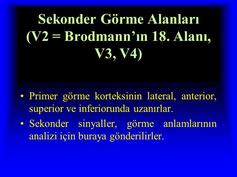 Sekonder Görme Alanları (V2 = Brodmann'ın 18.