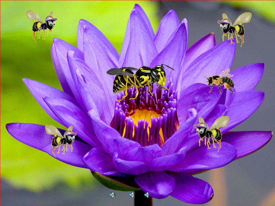2 Merhaba arkadaşlar, beni tanıdınız mı? Evet ben bir arıyım. Biz arılar tıpkı sizin gibi çok çalışkanız. Çalışırken hep sesler çıkarırız. Sahi biz ha