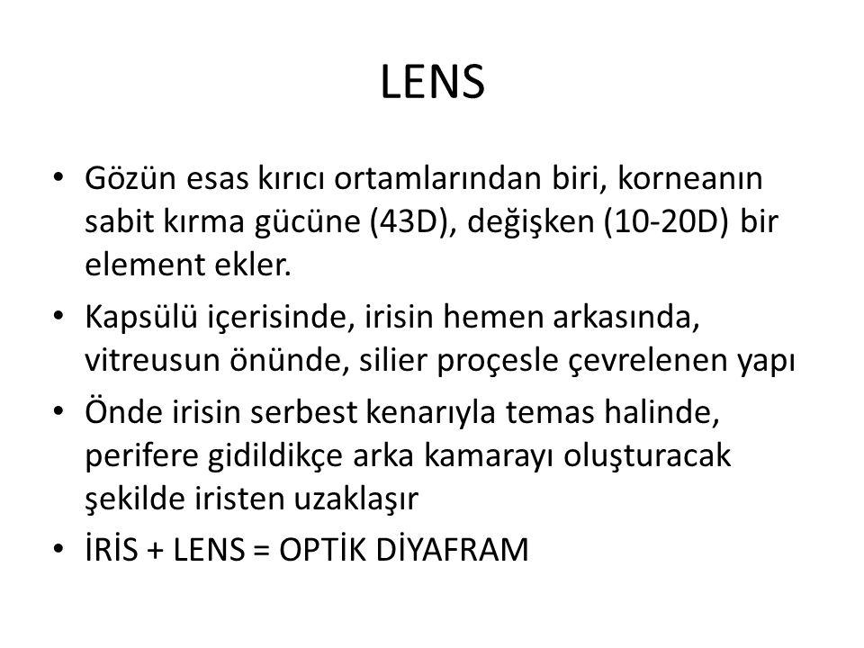 Gözün esas kırıcı ortamlarından biri, korneanın sabit kırma gücüne (43D), değişken (10-20D) bir element ekler. Kapsülü içerisinde, irisin hemen arkası