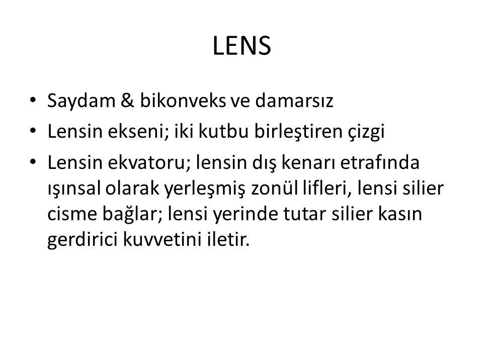 LENS Saydam & bikonveks ve damarsız Lensin ekseni; iki kutbu birleştiren çizgi Lensin ekvatoru; lensin dış kenarı etrafında ışınsal olarak yerleşmiş z