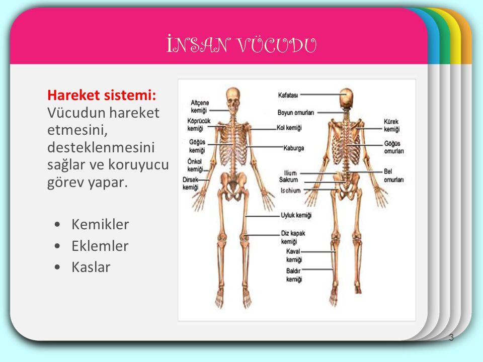 NABIZ BÖLGELER İ Şah damarı (adem elmasının her iki yanında) Ön-kol damarı (Bileğin iç yüzü, baş parmağın üst hizası) Bacak damarı (Ayak sırtının merkezinde) Kol damarı (Kolun iç yüzü, dirseğin üstü) 14