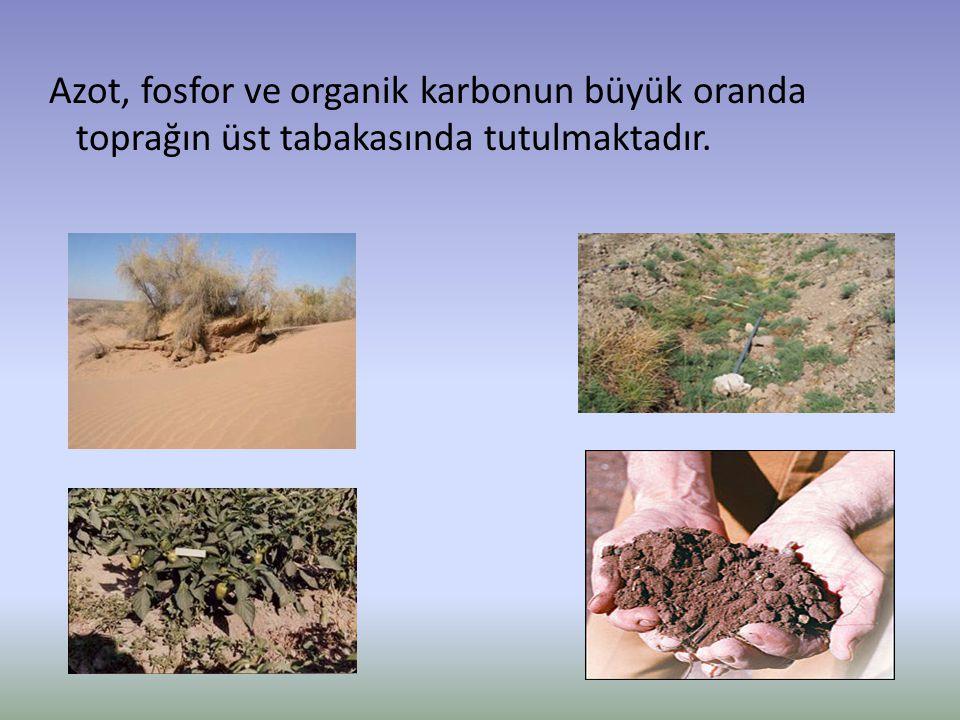 Azot, fosfor ve organik karbonun büyük oranda toprağın üst tabakasında tutulmaktadır.