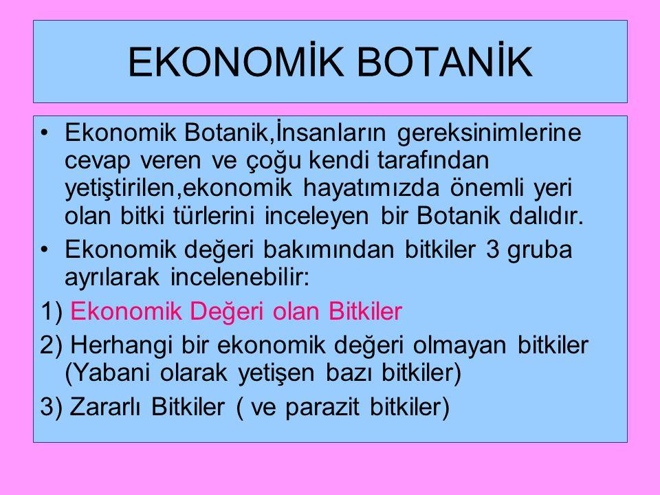 Ekonomik (Faydalı) Bitkilerin Sınıflandırılması 1.Tıbbi Bitkiler 2.Besin Bitkileri A.