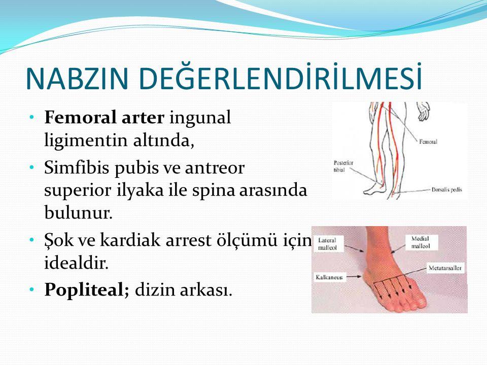 NABZIN DEĞERLENDİRİLMESİ Femoral arter ingunal ligimentin altında, Simfibis pubis ve antreor superior ilyaka ile spina arasında bulunur. Şok ve kardia