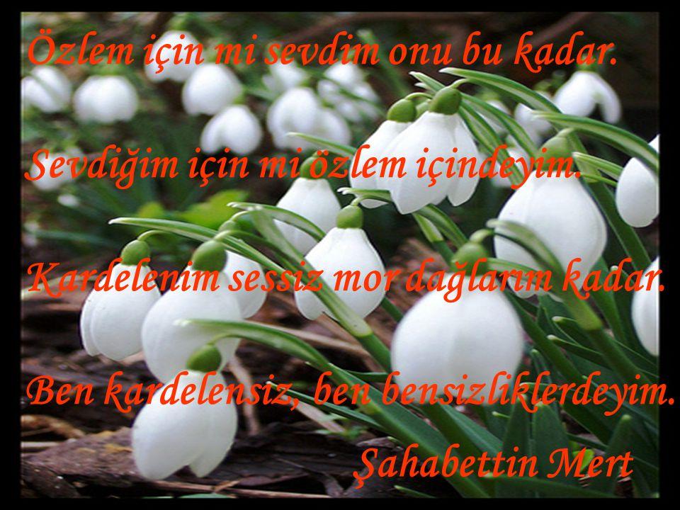 Şiir: Kardelen / Şahabettin Mert - Kastamonu Dizeyn & Paylaşım Kastamonu.TR smert37@mynet.com