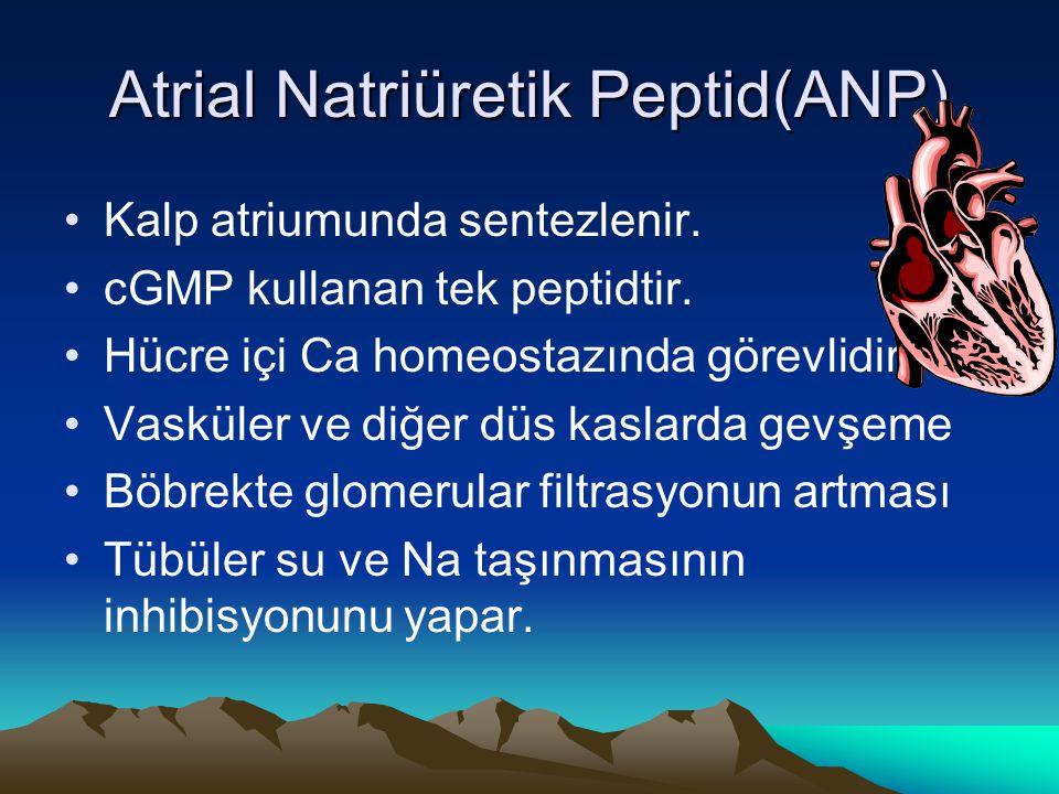 Atrial Natriüretik Peptid(ANP) Kalp atriumunda sentezlenir. cGMP kullanan tek peptidtir. Hücre içi Ca homeostazında görevlidir. Vasküler ve diğer düs