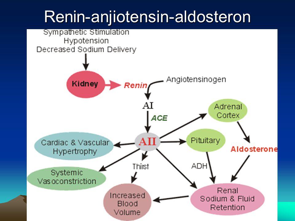Renin-anjiotensin-aldosteron