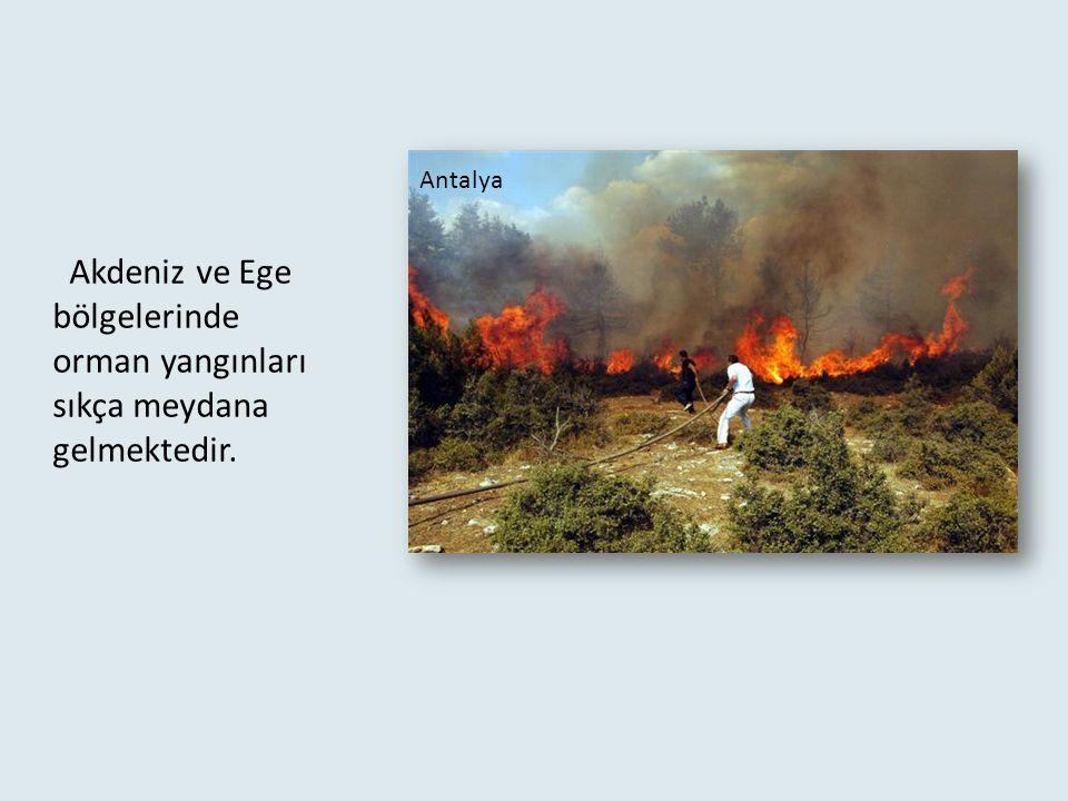 Orman Yangını : Çeşitli sebeplerle ormanlarda büyük yangınlar çıkar. Bu yangınlarda ormanlar çoğu zaman yok olur.