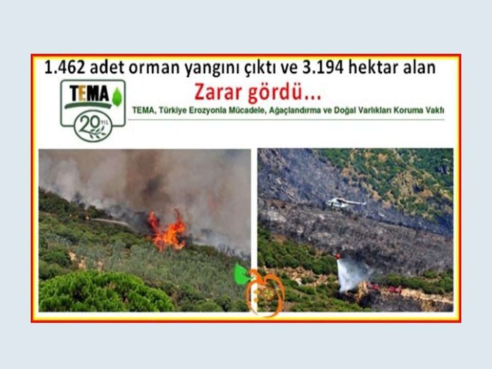 Akdeniz ve Ege bölgelerinde orman yangınları sıkça meydana gelmektedir. Antalya