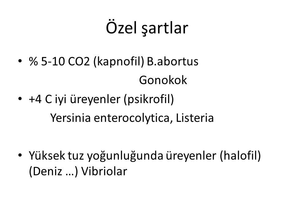 Özel şartlar % 5-10 CO2 (kapnofil) B.abortus Gonokok +4 C iyi üreyenler (psikrofil) Yersinia enterocolytica, Listeria Yüksek tuz yoğunluğunda üreyenle