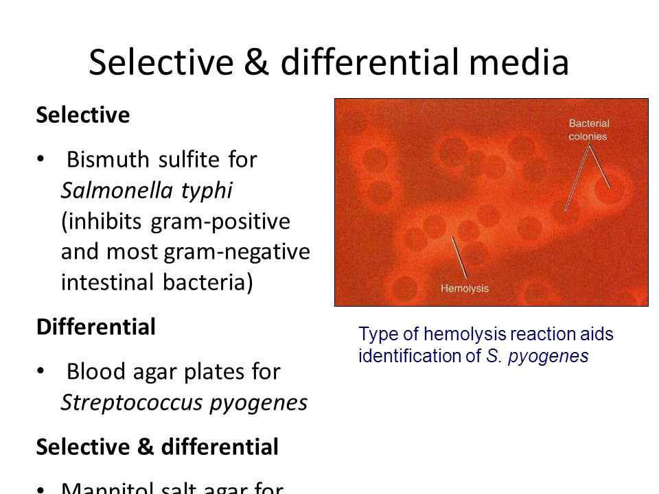 Selective & differential media Selective Bismuth sulfite for Salmonella typhi (inhibits gram-positive and most gram-negative intestinal bacteria) Diff