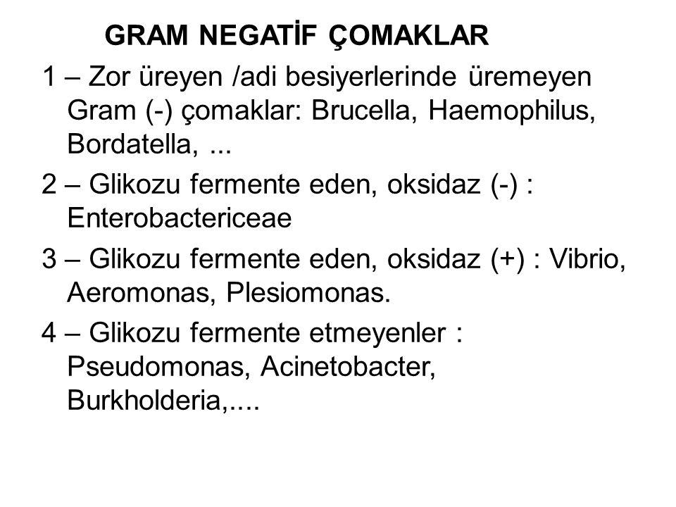 GRAM NEGATİF ÇOMAKLAR 1 – Zor üreyen /adi besiyerlerinde üremeyen Gram (-) çomaklar: Brucella, Haemophilus, Bordatella,... 2 – Glikozu fermente eden,