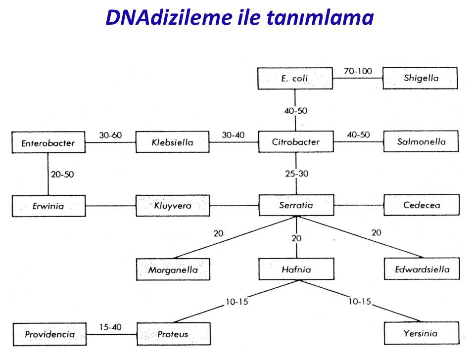 DNAdizileme ile tanımlama