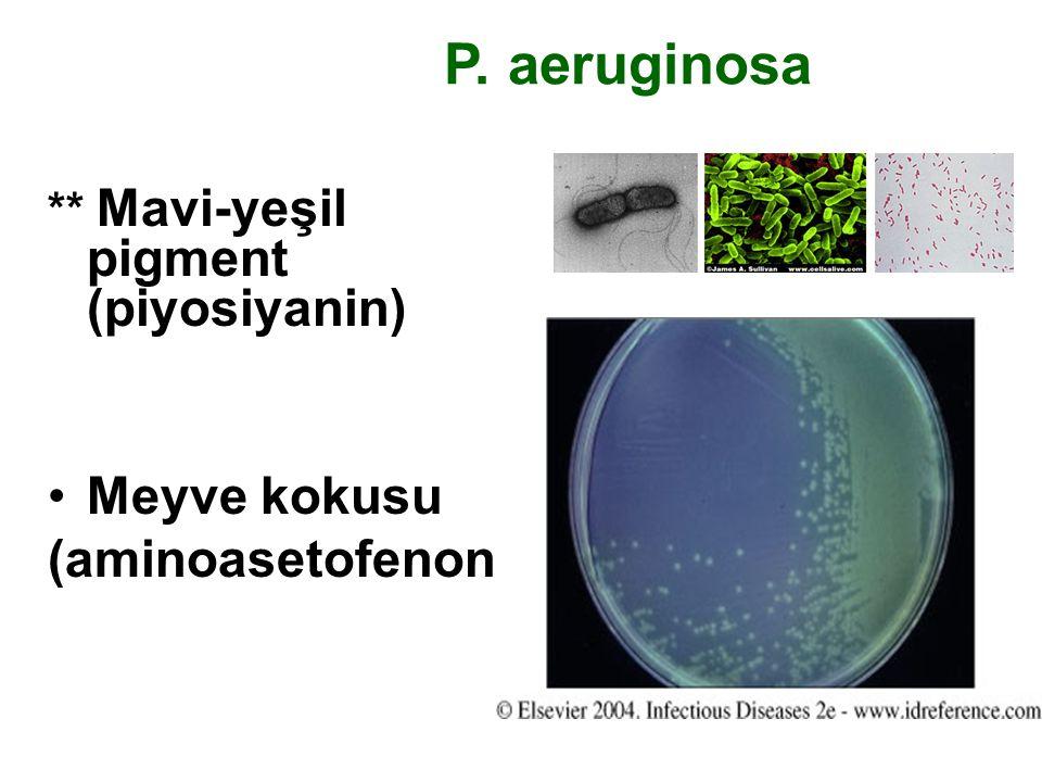 P. aeruginosa ** Mavi-yeşil pigment (piyosiyanin) Meyve kokusu (aminoasetofenon)