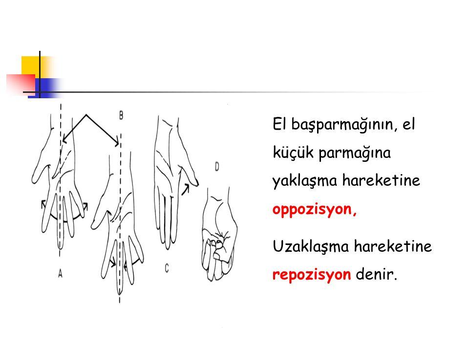El başparmağının, el küçük parmağına yaklaşma hareketine oppozisyon, Uzaklaşma hareketine repozisyon denir.