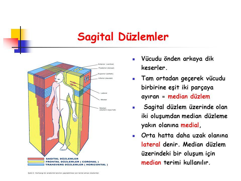 Koronal veya Frontal Düzlemler Vücut boyunca uzanan fakat vücudu sağdan sola kesen düzlemlerdir.